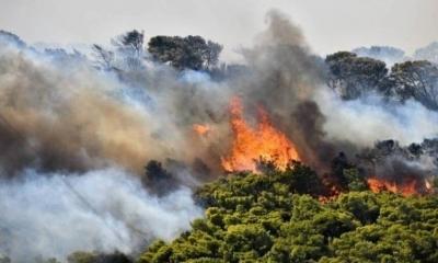 Σε εξέλιξη πυρκαγιά και στα Χανιά – Οι φλόγες καίνε δασική έκταση