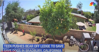 Απίστευτες εικόνες: 17χρονη τα... βάζει με αρκούδα για να σώσει τα σκυλιά της