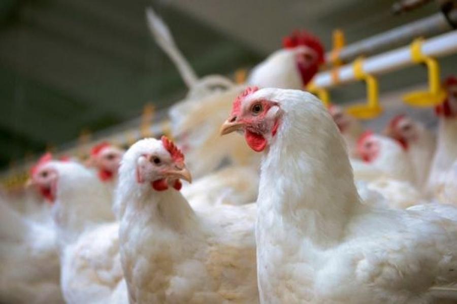 Κρήτη: Ανάκληση βιολογικού κοτόπουλου και δεκάδων χιλιάδων βιολογικών αυγών