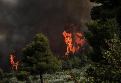 Δραματική η κατάσταση στη Βόρεια Εύβοια - Εκκενώθηκαν 6 οικισμοί - Σε τρία μέτωπα η μάχη με τις φλόγες