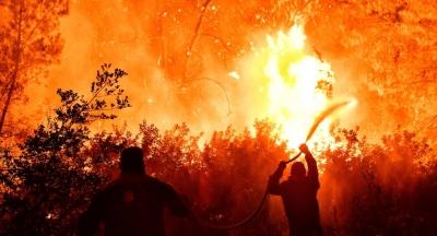 Πύρινη λαίλαπα στον Σχίνο Κορινθίας - Χαρδαλιάς: Από καύση υλικών σε ελαιώνα η πυρκαγιά