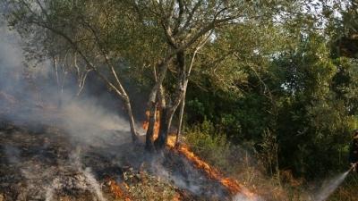 Οριοθετήθηκε η πυρκαγιά στο Πανόραμα Θεσσαλονίκης - Δεν εκκενώθηκε οικισμός
