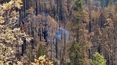 Τεράστιο δέντρο καίγεται από το καλοκαίρι του 2020 στην Καλιφόρνια
