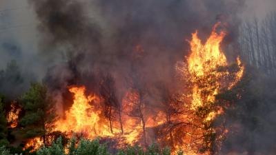 Εθνικό Αστεροσκοπείο: Πάνω από 60.000 στρέμματα παραδόθηκαν στη φωτιά στις τρεις πρώτες ημέρες του Αυγούστου