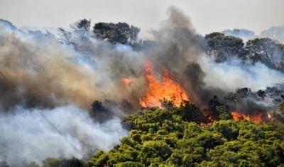 Ολονύχτια μάχη σε 7 πύρινα μέτωπα στην Κεφαλλονιά: Εκκενώθηκαν χωριά - Καίγονται καταπράσινα δάση