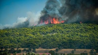 Φωτιά σε δασική έκταση στην Αμαλιάδα - Επιχειρούν 18 πυροσβέστες με 8 οχήματα