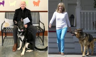 Εκτός Λευκού Οίκου τα σκυλιά του Biden λόγω επιθετικής συμπεριφοράς - Το ένα δάγκωσε φρουρό