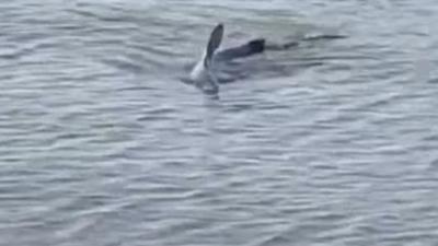 Το είδαμε και αυτό: Καρχαρίας σε παραλία του... Ναυπλίου