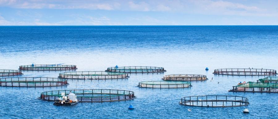 Ξεκινούν αιτήσεις οικονομικής ενίσχυσης στην υδατοκαλλιέργεια