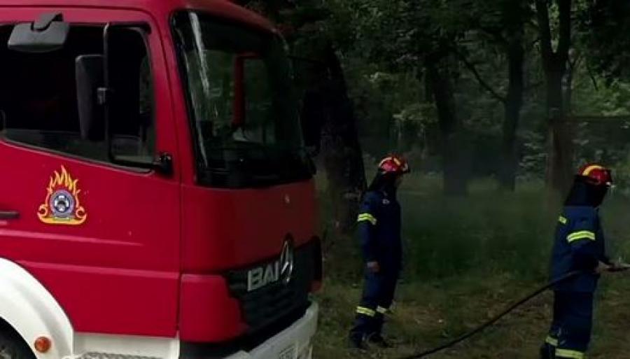 Πυρκαγιά σε δασική έκταση στην περιοχή Κοτρωνιά του δήμου Σουφλίου