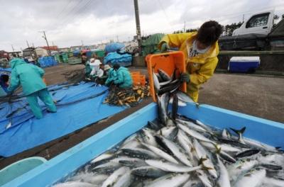 Ψάρια με ραδιενέργεια αλιεύθηκαν στα νερά της Φουκουσίμα