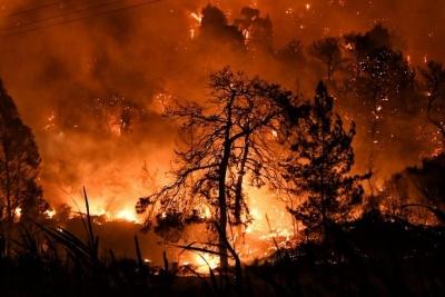 Τραγωδία στην Εύβοια - Στάχτη 350.000 στρέμματα - Εκκενώνεται το Γύθειο - 64 ενεργές πυρκαγιές στην Ελλάδα