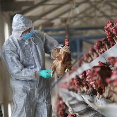 Κίνα: Καταγράφηκε το πρώτο κρούσμα του ιού H5N6 της γρίπης των πουλερικών σε άνθρωπο