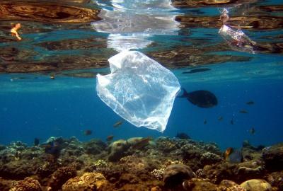 Παπαθεοδώρου (καθ. Ωκεανογραφίας): Τα τελευταία 15 χρόνια η πλαστική ρύπανση των θαλασσών είναι μεγαλύτερη