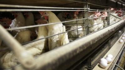 Κίνα: Καταγράφηκε το πρώτο κρούσμα γρίπης των πτηνών σε άνθρωπο παγκοσμίως