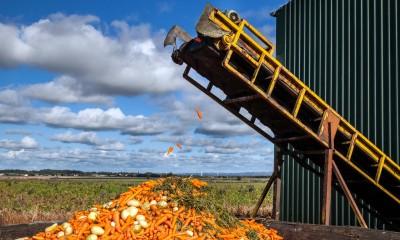 Ένα στα τρία τρόφιμα πετιέται παγκοσμίως - Τεράστια σπατάλη στην Ευρώπη, 143 δισ. ευρώ ετήσιο κόστος