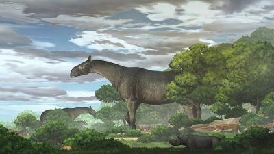 Νέο είδος γιγάντιου ρινόκερου αποκάλυψαν απολιθώματα στην Κίνα: Ψηλότερο κι από καμηλοπάρδαλη