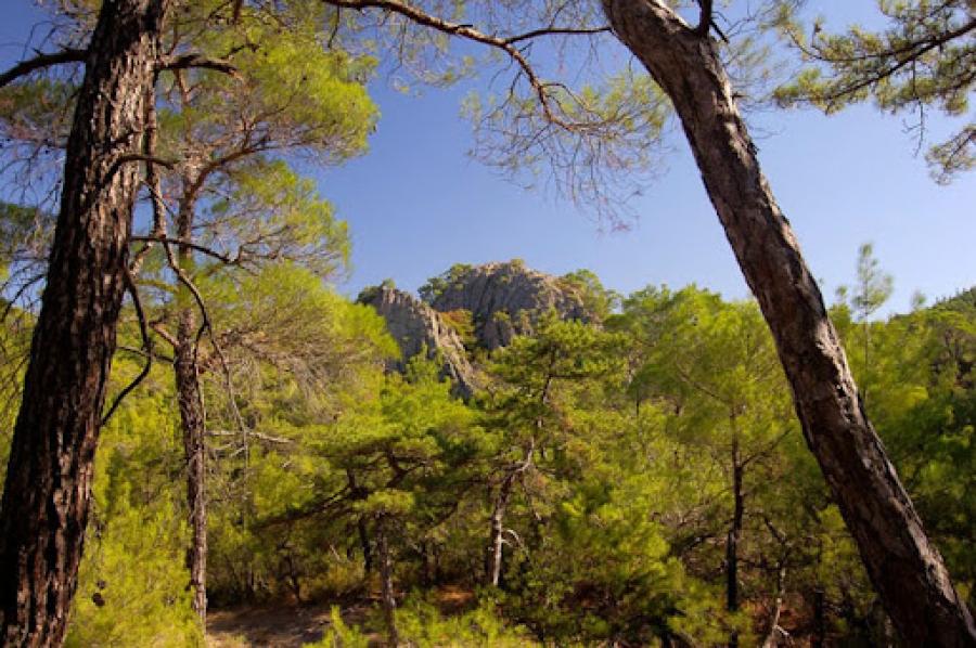 Έβρος: Απαγόρευση κυκλοφορίας σε δάση τη Δευτέρα (2/8), λόγω υψηλού κινδύνου πυρκαγιάς