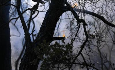 Αττική: Απομακρύνονται καμένα δέντρα από τις πυρόπληκτες περιοχές