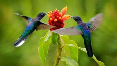 Μαζικός θάνατος εκατοντάδων πουλιών λόγω μιας ανεξήγητης και μυστηριώδους ασθένειας προβληματίζει τους επιστήμονες