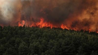 Οι πρόσφατες πυρκαγιές στην Αττική έκαψαν το 16% των δασών της