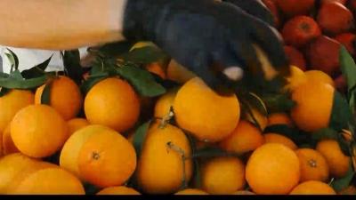 Έφαγαν 30 κιλά πορτοκάλια στο αεροδρόμιο σε μισή ώρα για να μην πληρώσουν υπέρβαρο
