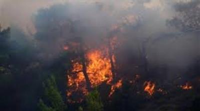 Μεγάλη δασική πυρκαγιά κοντά στον οικισμό Κορυφή Πύργου Ηλείας - Μήνυμα 112 προληπτικής εκκένωσης του χωριού