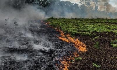 Η Χιλή θα συντονίζει τις προσπάθειες κατάσβεσης του Αμαζονίου με κονδύλια από τους G7 - Στέλνει 4 αεροπλάνα
