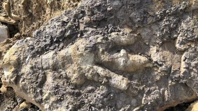 Βρέθηκαν απολιθώματα ενός πελώριου δεινόσαυρου - Πιθανολογείται πως έφτανε τα 9 μέτρα - Ζούσε πριν 174 εκατ. χρόνια!