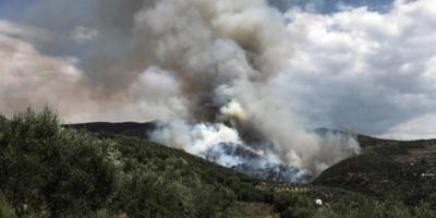 Υπό έλεγχο η φωτιά στη Σαλαμίνα – Δεν απειλήθηκαν κατοικίες