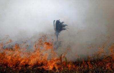 Δίχως τέλος η καταστροφή στον Αμαζόνιο, 2.000 νέες φωτιές