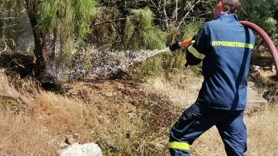 Πυρκαγιά και στη Βοιωτία - Στο σημείο επιχειρούν 24 πυροσβέστες
