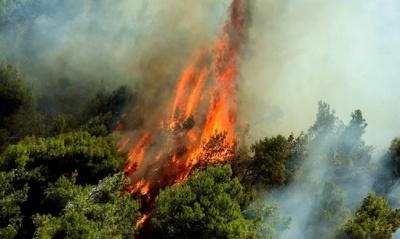 Σε ύφεση η πυρκαγιά στην Κέρκυρα - Επιστρέφουν στις εστίες τους οι κάτοικοι