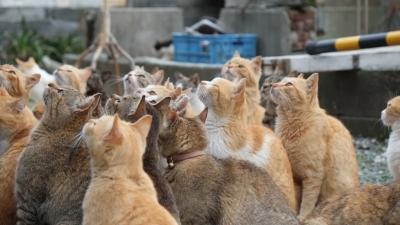 Το νησί όπου η αναλογία ανθρώπων - γατών είναι 1 προς 6! Πως προκλήθηκε αυτή η κατάσταση