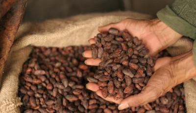 Xαμηλό διετίας για τα futures του κακάου, η σοκολάτα «δείχνει» για την ανάκαμψη σχήμα L