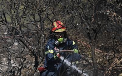 Αλεξανδρούπολη: Φωτιά τώρα σε δρυοδάσος του δήμου Σουφλίου
