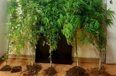 Καστοριά: Ηλικιωμένος καλλιεργούσε δενδρύλλια κάνναβης έξω από δύο σπίτια του