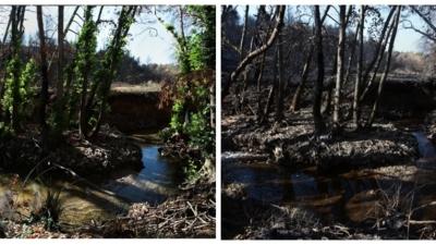 Βαρυμπόμπη: Δύο μήνες μετά τη καταστροφική φωτιά, η φύση ξαναγεννιέται