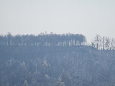 Οι εχθροί εντός των πυλών και οι καταστροφικές πυρκαγιές – Τι συμβαίνει με τα αιολικά πάρκα;