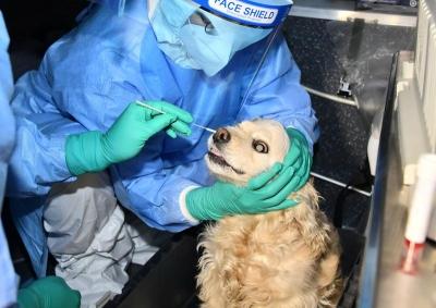 Σε τεστ για κορωνοϊό υποβλήθηκε σκύλος αφού εμφάνισε συμπτώματα - Ο ιδιοκτήτης νοσούσε ήδη
