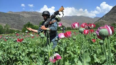 Το μεγάλο διακύβευμα στο Αφγανιστάν - Θα σταματήσουν την παραγωγή οπίου οι Ταλιμπάν; - Η απάντηση της Δύσης