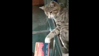 Κωνσταντινούπολη: Viral το βίντεο Imamoglu με (εκνευρισμένη) γάτα σε ακυρωτικό μηχάνημα του μετρό