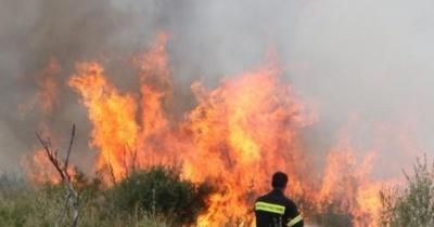 Φωτιά σε δασική έκταση στη Βοιωτία – Την κατάσβεσή της επιχειρούν οι πυροσβεστικές δυνάμεις