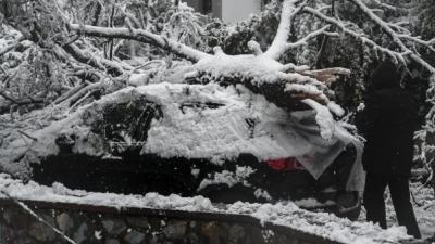Εθνικό Αστεροσκοπείο για Μήδεια: Γιατί έπεσαν τόσα δέντρα από το χιόνι στην Αττική