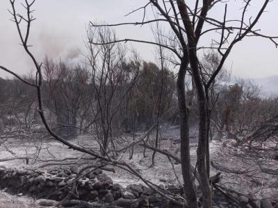 Ιταλία - πυρκαγιές: Σε κατάσταση έκτακτης ανάγκης η Σαρδηνία