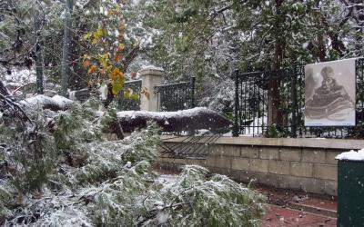 Η «Μήδεια» χτύπησε και το κέντρο της Αθήνας - Έπεσε δέντρο κοντά στη Βουλή