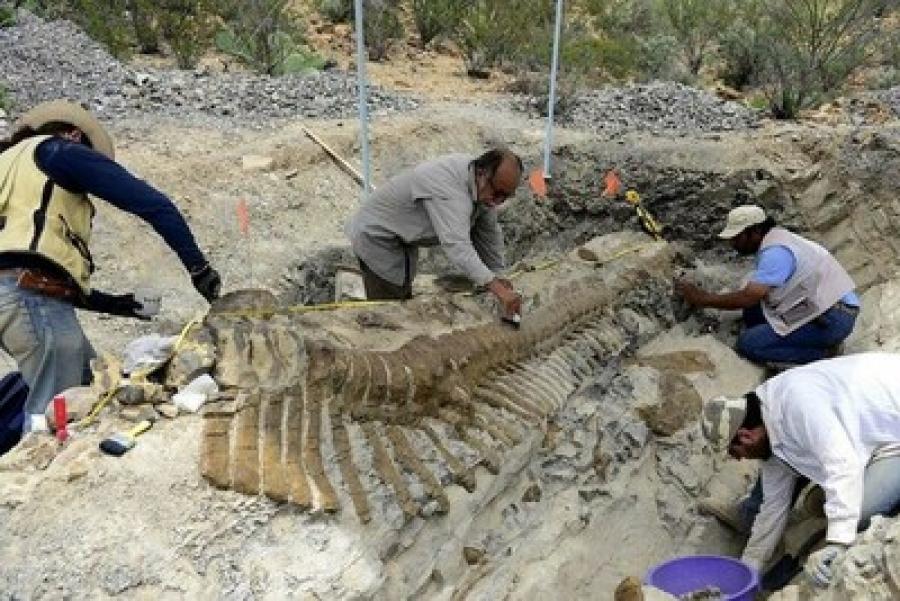 Αναγνωρίστηκε νέο είδος δεινοσαύρων στο Μεξικό