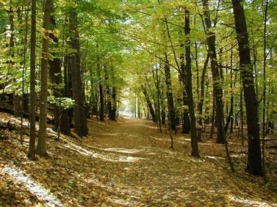 Έρευνα: Περιθώριο για τη φύτευση 1,2 τρισ. δέντρων στον πλανήτη