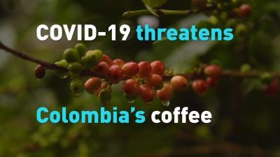 Κολομβία: Η έλλειψη εργατικών χεριών λόγω πανδημίας θέτει σε κίνδυνο τη συγκομιδή του καφέ και το μέλλον των εξαγωγών