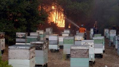 «Plan BEE»: Αποζημιώσεις και για ανασφάλιστα μελίσσια που κάηκαν στις πυρκαγιές - Τα σχέδια του υπουργείου